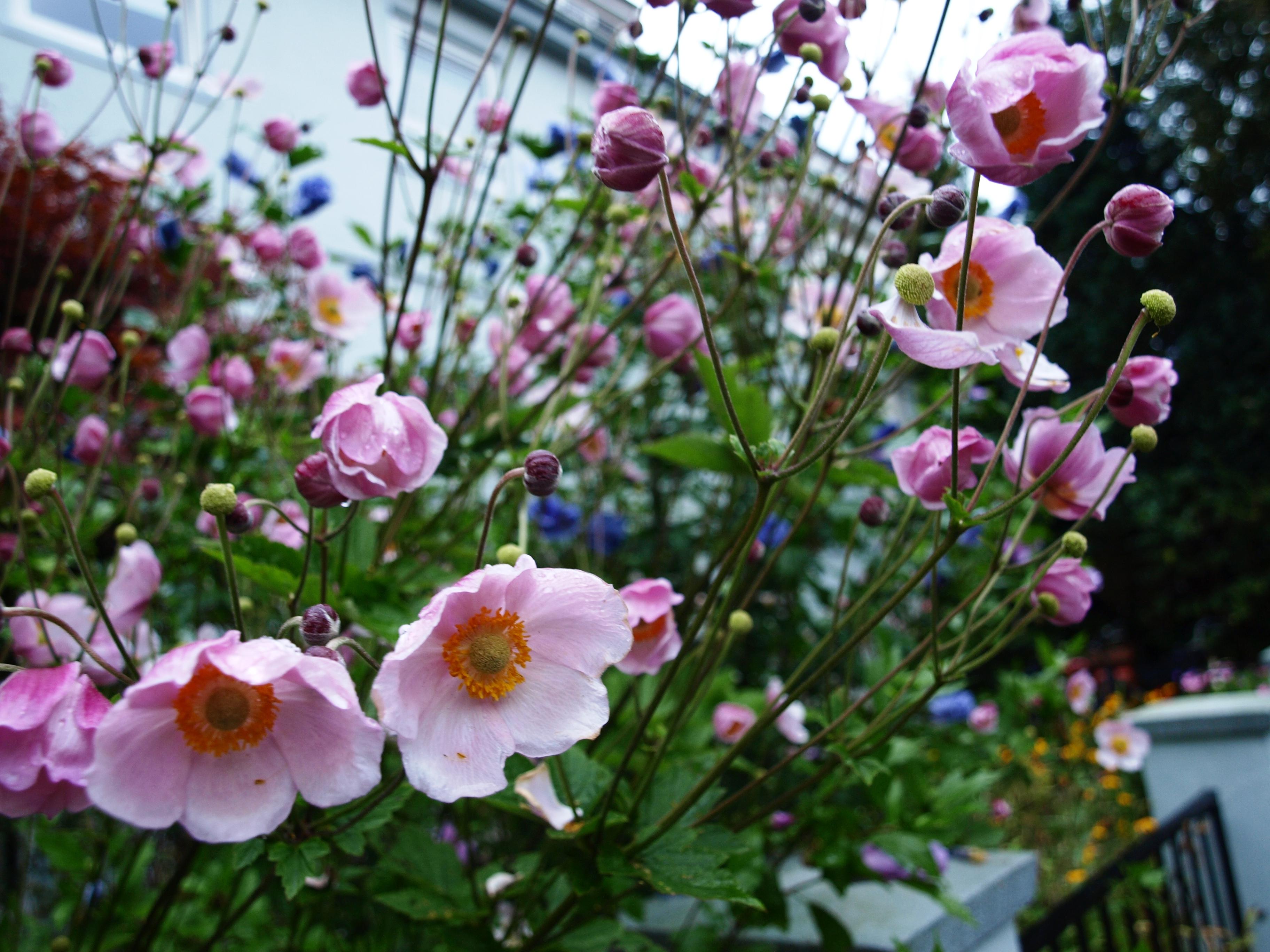 Blumen Nachwuchs