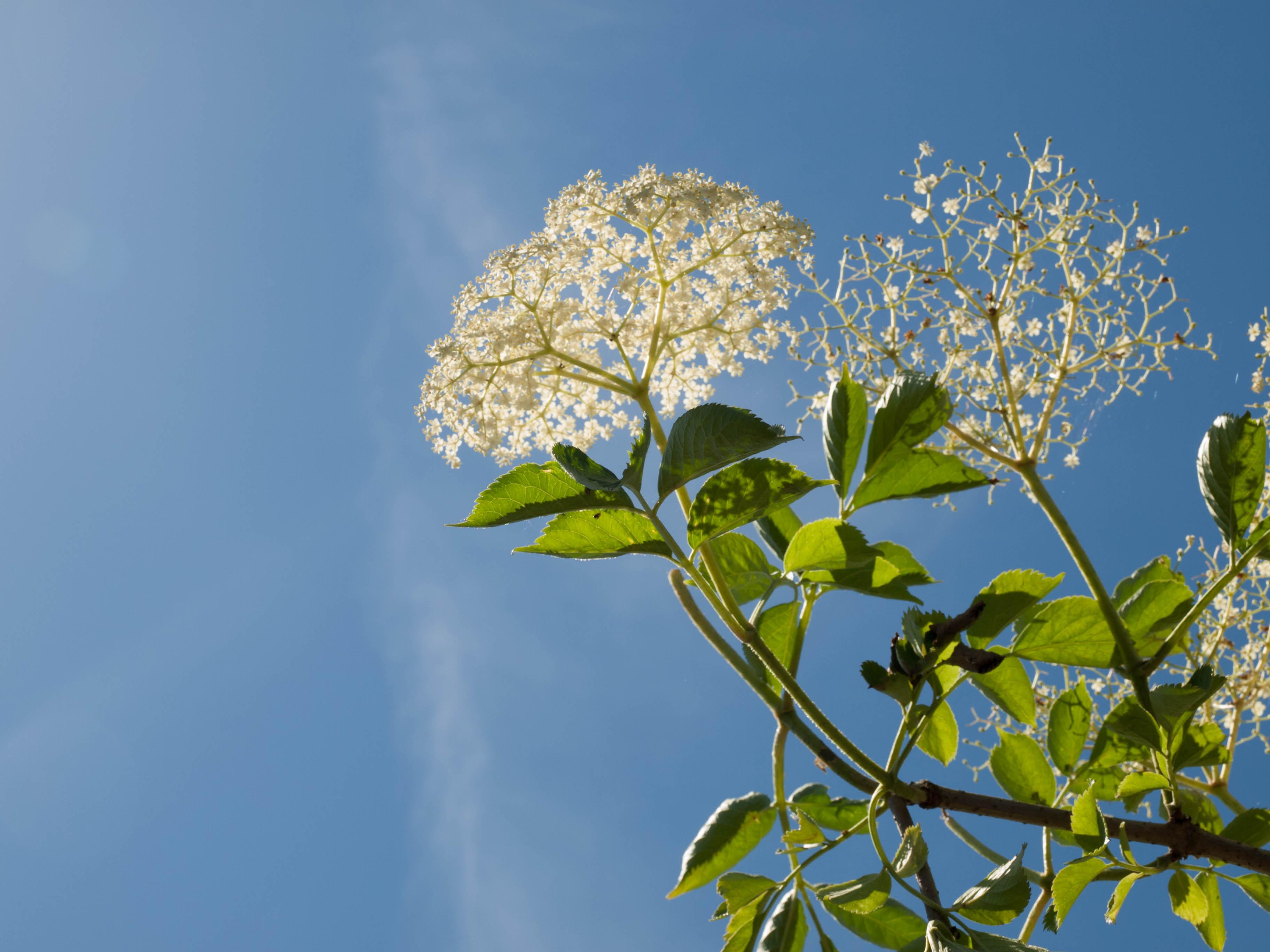 Blume mit Himmel