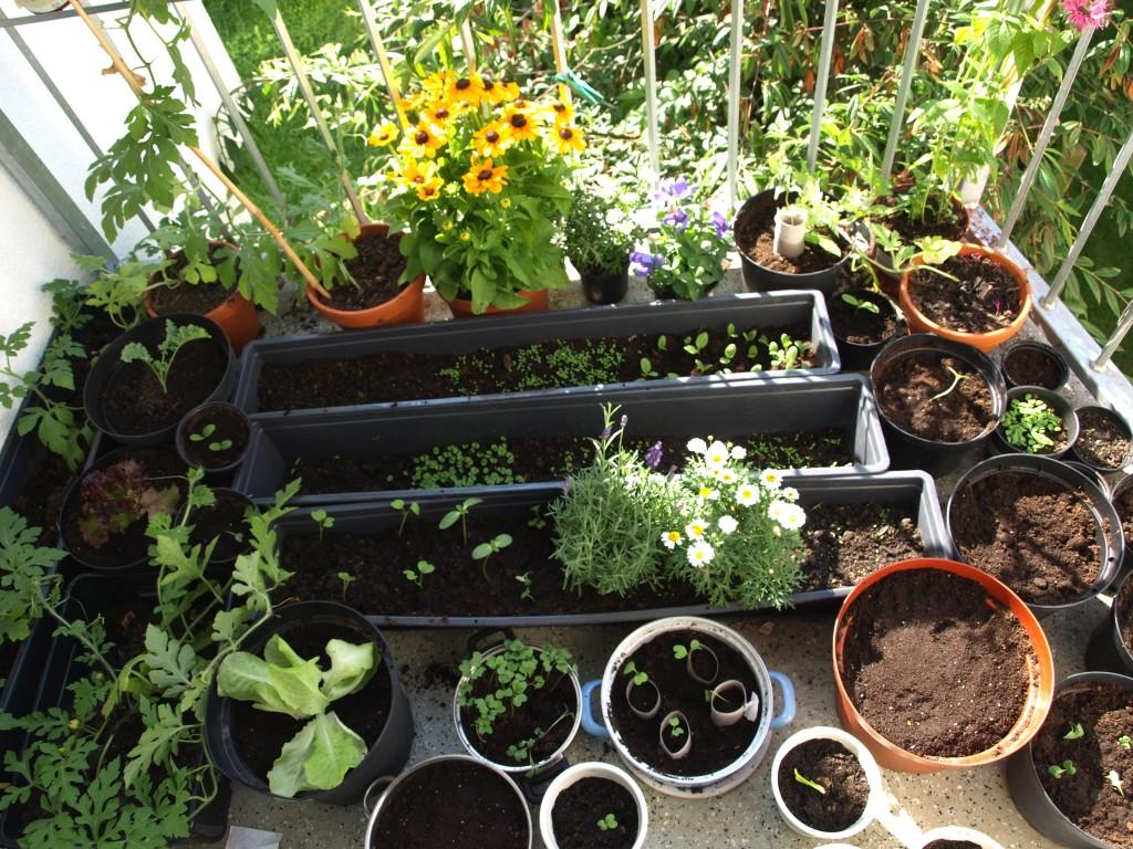 Gemüse auf Balkon
