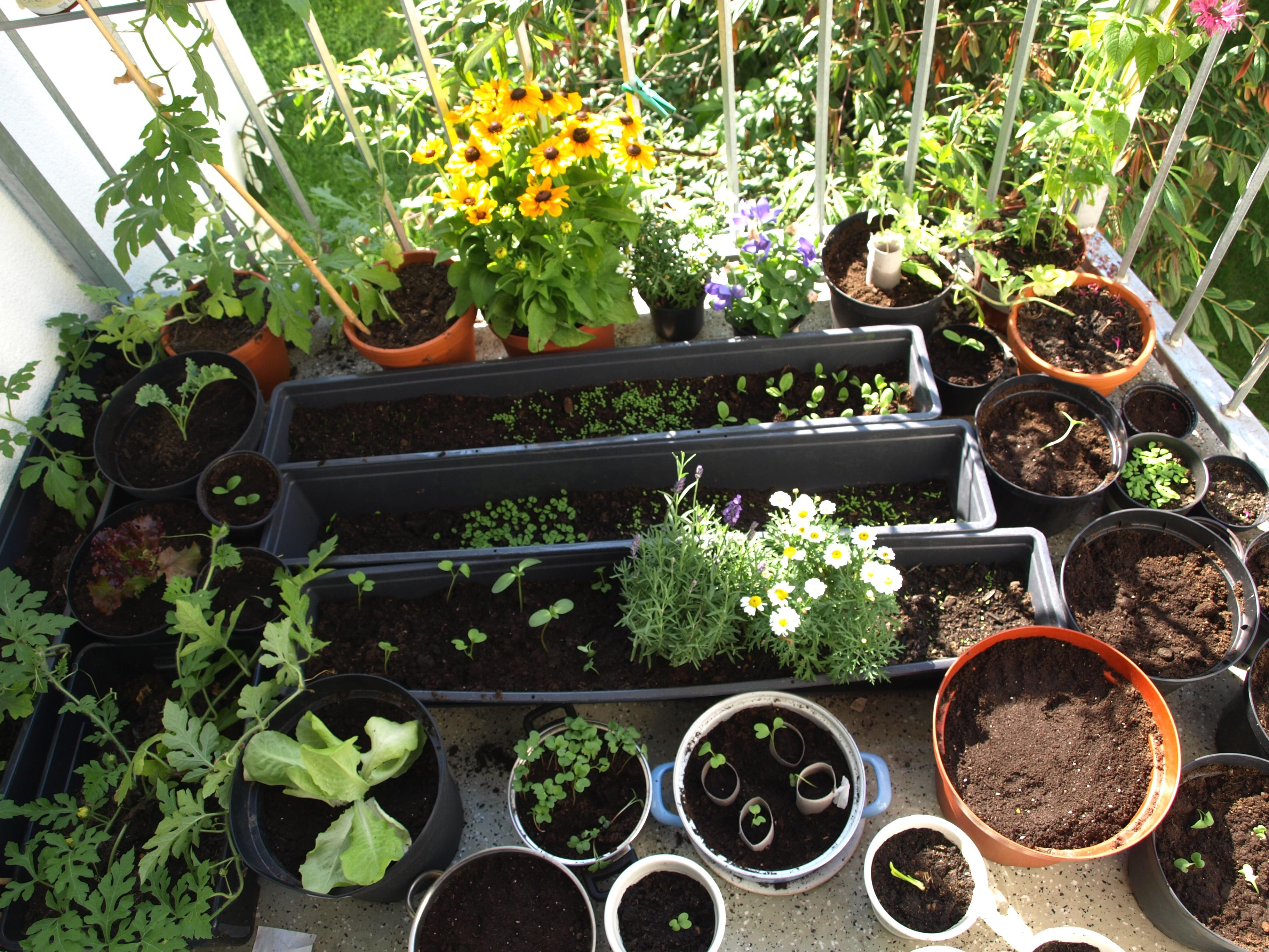 Salat auf dem balkon sarah marias blog - Krautergarten auf dem balkon ...