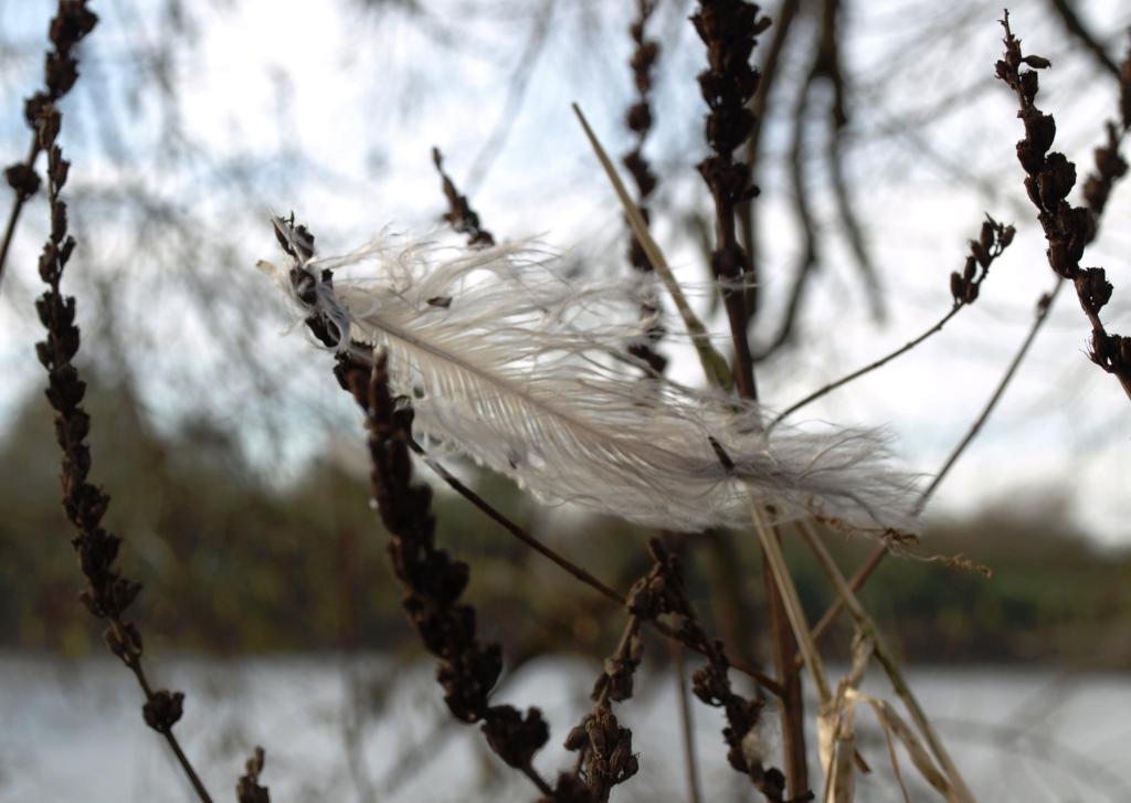 Feder im Wind an der Weser