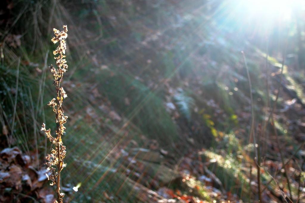 Sonnenlicht im Harz