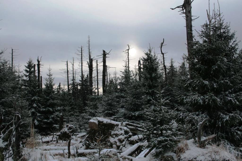 Am Brocken im Harz