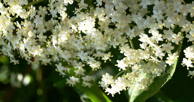 Bild Türkisch Blume