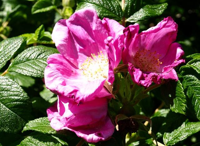 Blog Blume Hebräisch