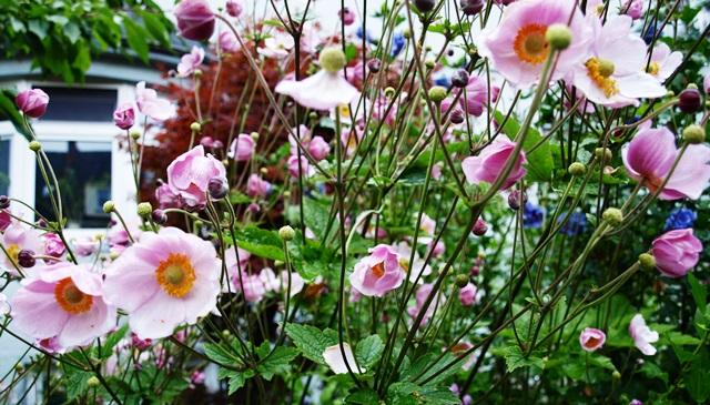 Blumen-Sprache
