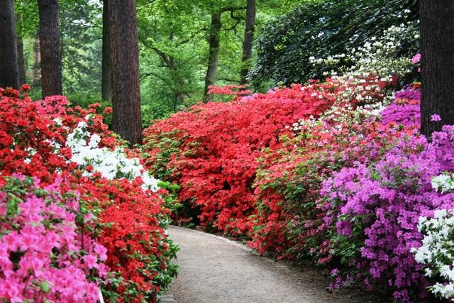 Rhododendronpark_Weg
