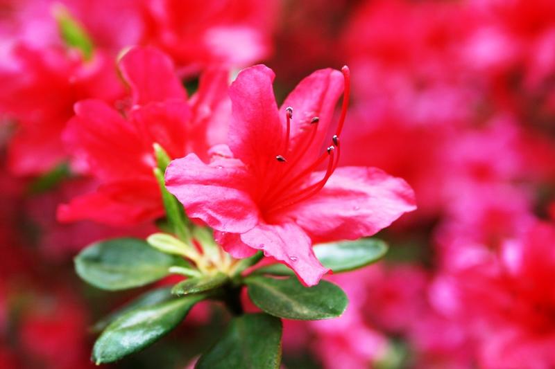Im Rhododendronpark Bremen