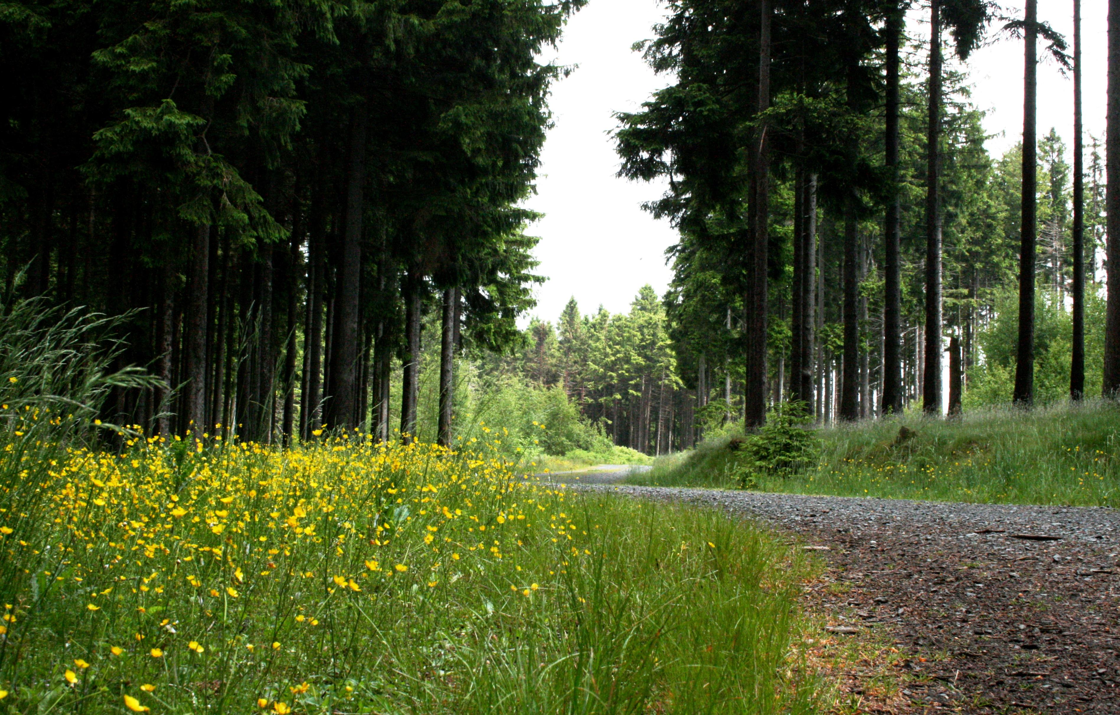 Wanderweg Bad Harzburg
