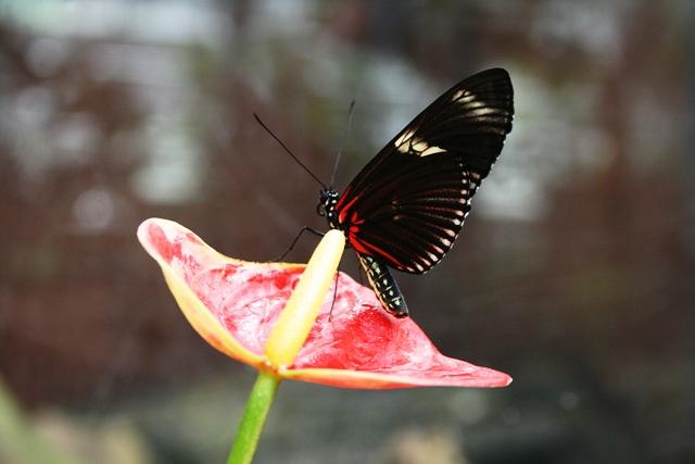 Schmetterlinge_Botanika