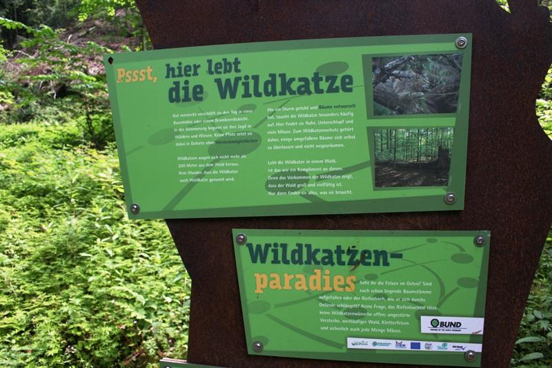 Wildkatzen_BadHarzburg